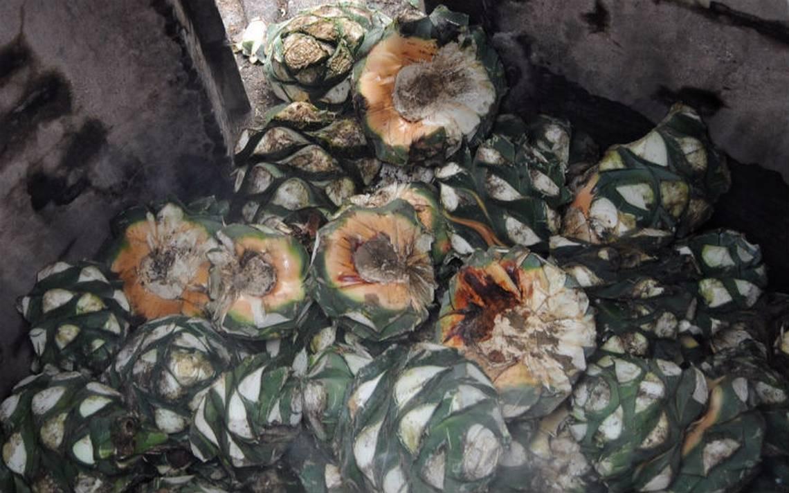 Secretario de Agricultura de AMLO pide no entregar más permisos de denominación de origen del mezcal