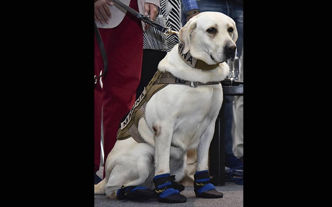 Esperanza canina: rinden homenaje a Frida y perros rescatistas tras sismo