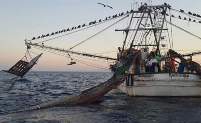 Prácticas mexicanas de pesca responsable son reconocidas en el mundo