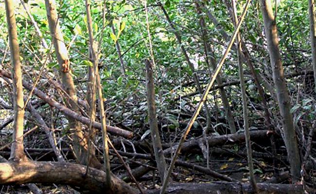 En riesgo de extinguirse humedales de Zihuatanejo