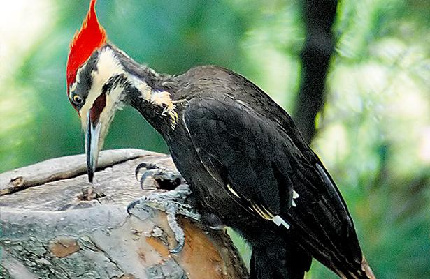 México registra 15 especies extintas en los últimos 50 años
