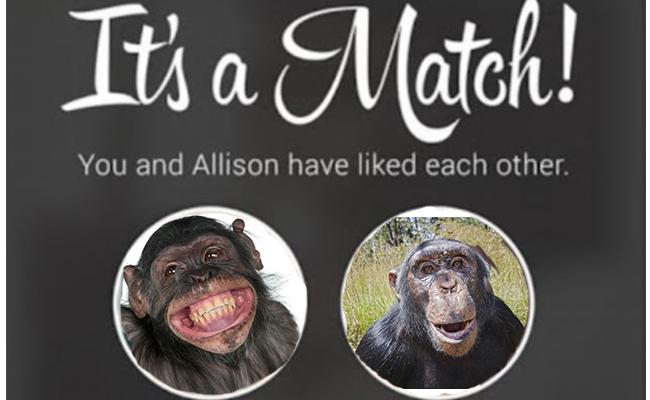 ¿Tinder para simios? Orangutanes prueban citas por internet