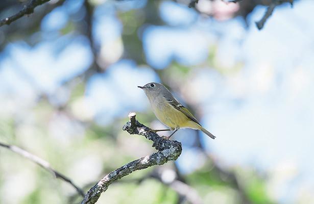 Registra Guanajuato nuevas especies de fauna