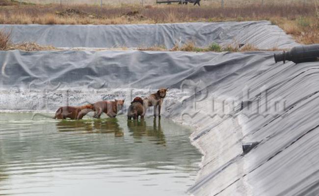 Tratadora de agua, trampa mortal para animales