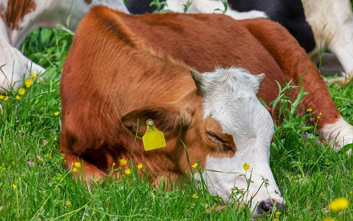 Conversaciones lácteas no cuajan con Canadá y EU por TLCAN