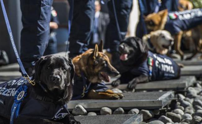 Jubilan a perros policía; ahora podrás adoptar uno