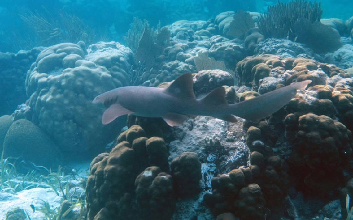 Unesco retira a los arrecifes de Belice de lista de Patrimonio en Peligro