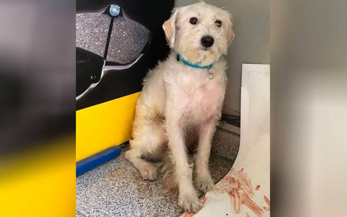 Twitter ayuda a reencontrar mascotas con dueños tras sismo