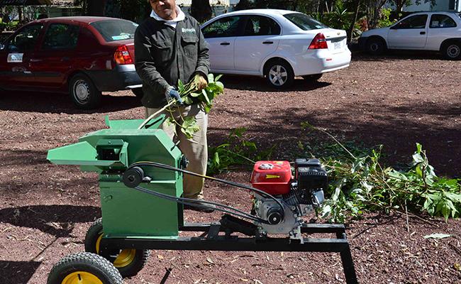 Reciclarán en Tlaxcala árboles naturales navideños