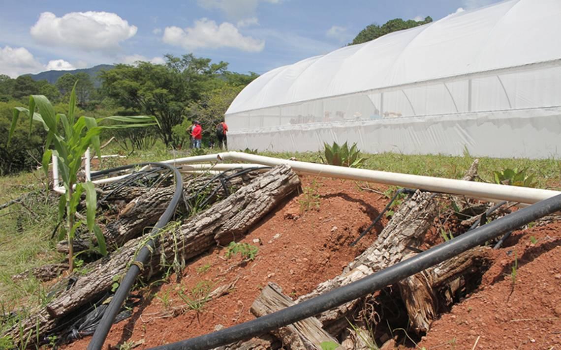 Inseguridad y talamontes azotan Tumbisca