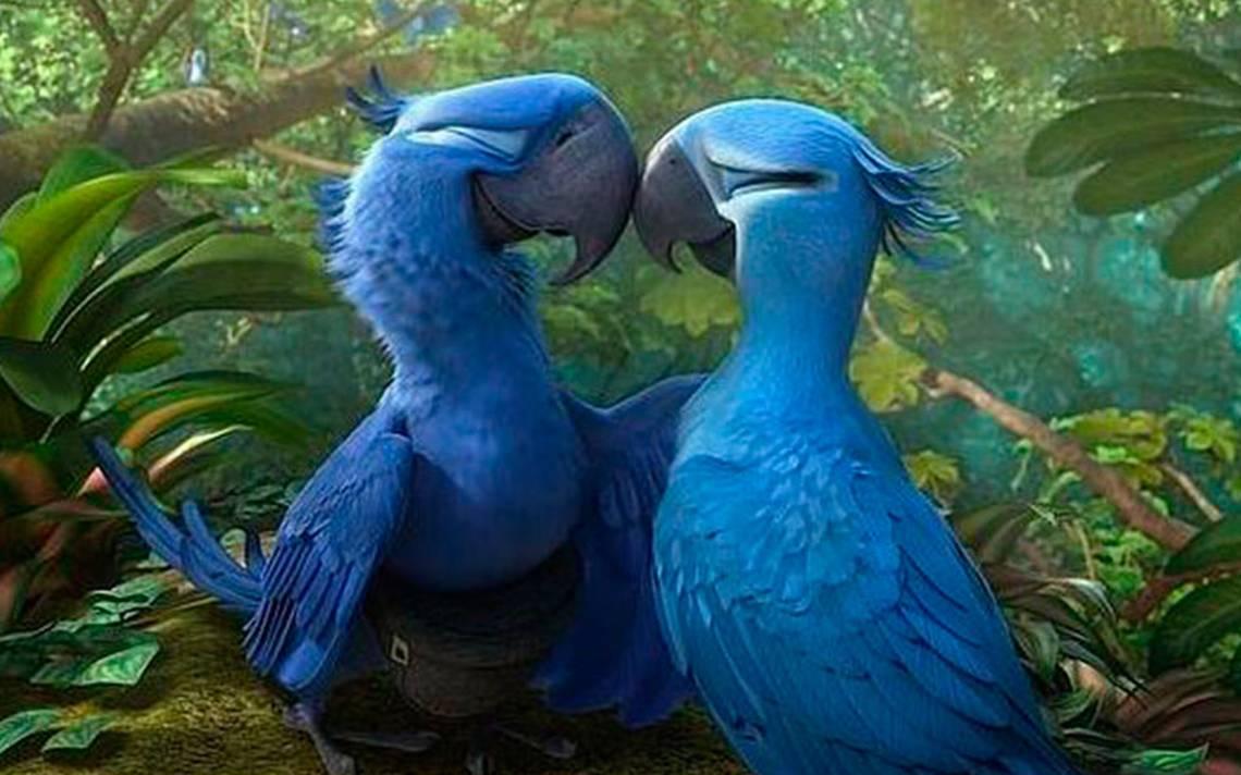 """¿Recuerdas a """"Blue"""" de Rio? Los guacamayos azules, al borde de la extinción"""
