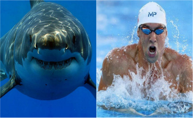 Michael Phelps se medirá ¡a un tiburón blanco!