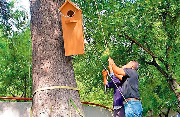 Colocan nidos para proteger a loros en peligro de extinción
