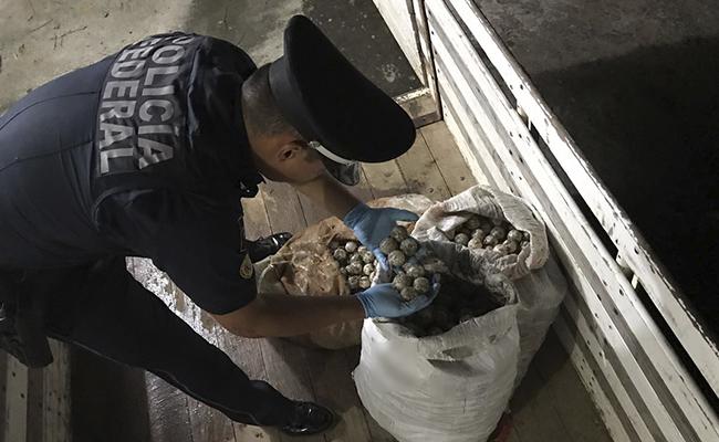 Aseguran más de 2 mil 500 huevos de tortuga en Oaxaca