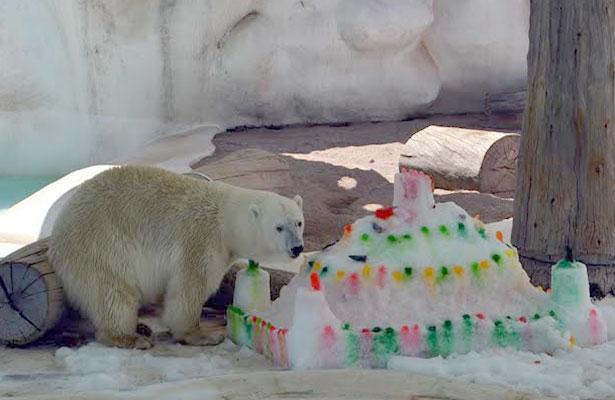 Conmemora Morelia el Día Internacional del Oso Polar