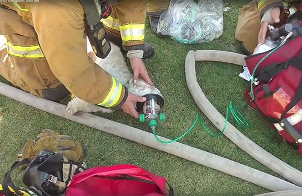 [Video] Bomberos salvan un perrito durante incendio en California