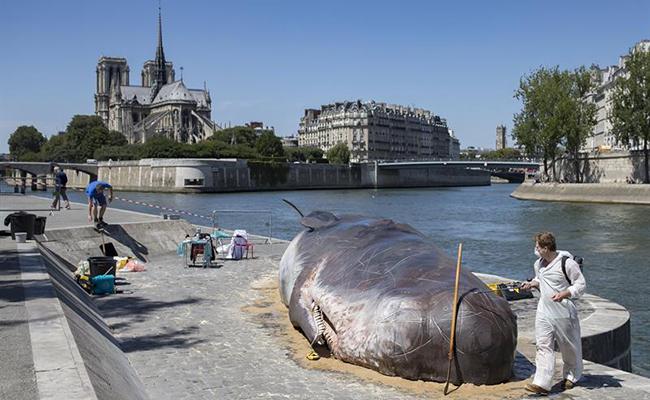 """Ballena """"encalla"""" en París y sorprende al mundo"""