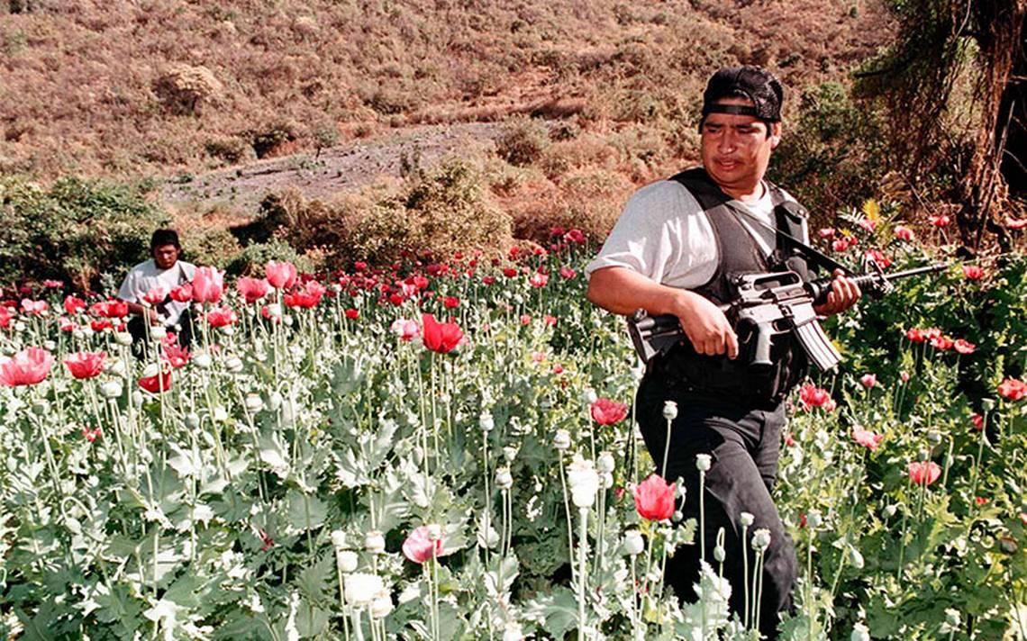 Se disputan 19 grupos criminales la producciA?n y distribuciA?n de amapola en Guerrero
