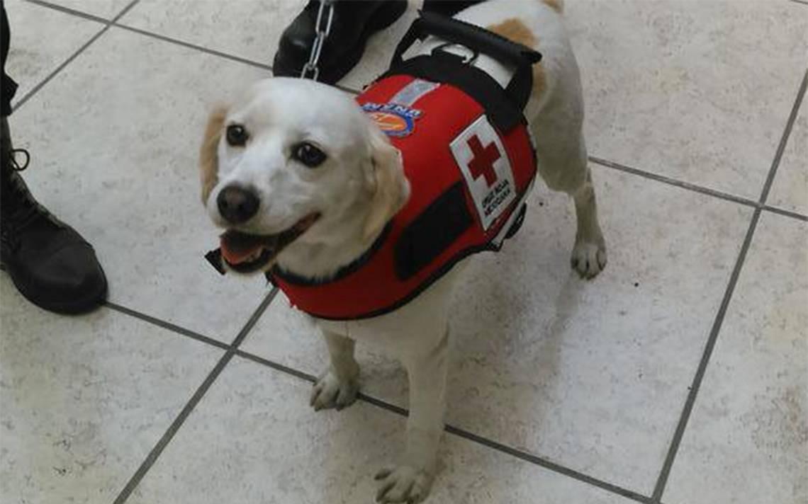 ¡Otro héroe canino! Salvaron a Hueso de la calle y ahora él rescata vidas