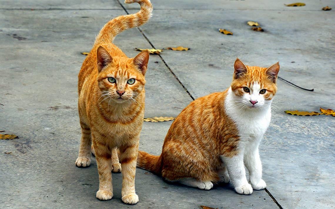 ¡Adiós ratones! Ministerio de Exteriores francés adopta dos gatos para eliminar plaga