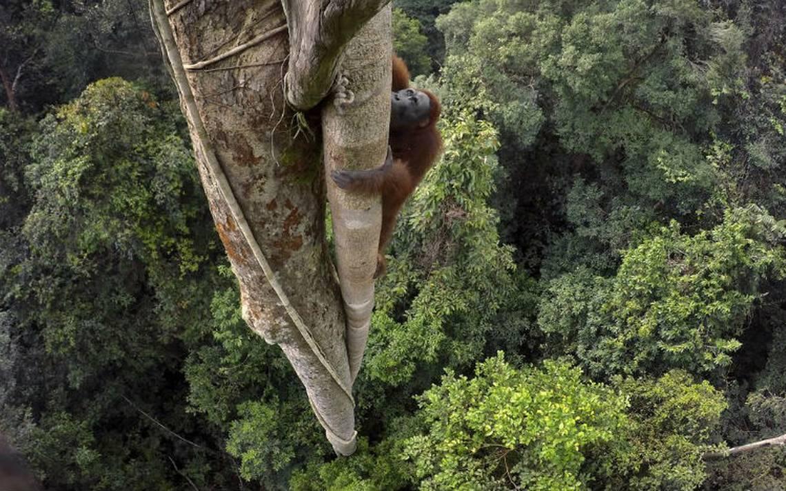 National Geographic revela sus mejores fotografías de vida salvaje