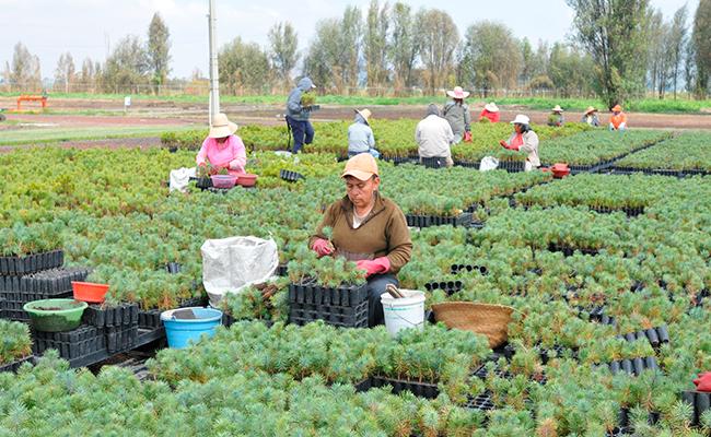 Cambio climático obliga a reprogramar cultivos