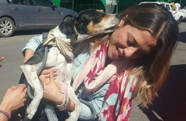 Encuentran a Mika, la perrita extraviada por Interjet