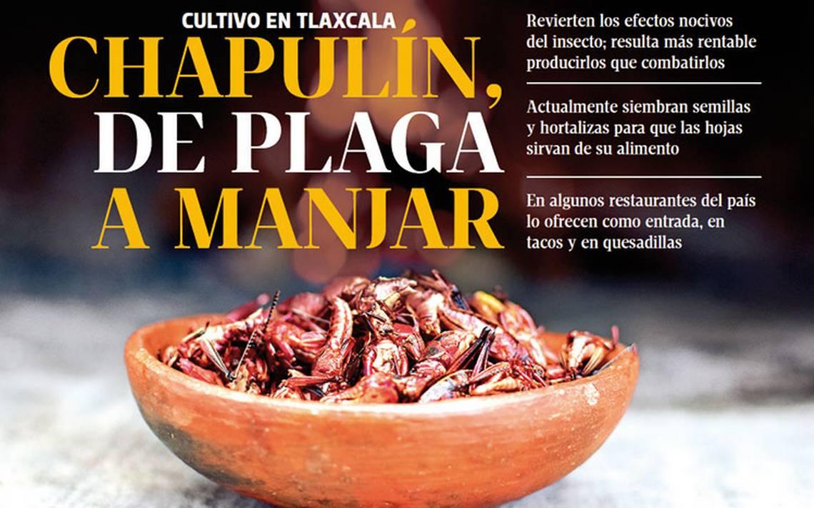 Chapulines, de plaga a platillo gourmet
