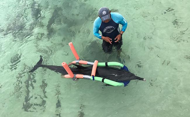 Reportan débil a delfín varado en Yucatán