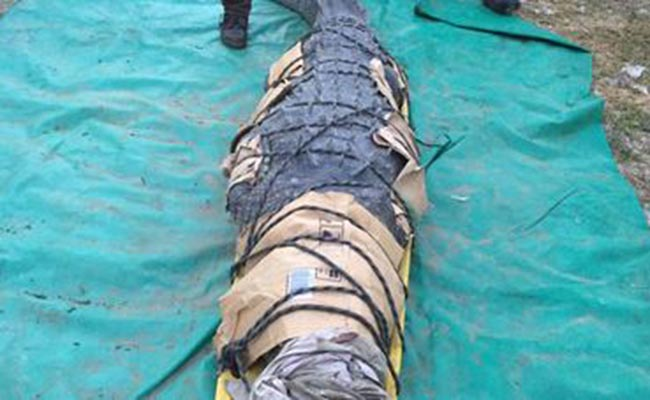 Capturan a cocodrilo que mató a un pescador en Chiapas