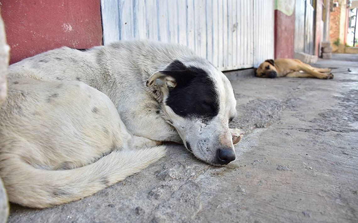 Lo que debes hacer para cuidar del perrito que acabas de rescatar