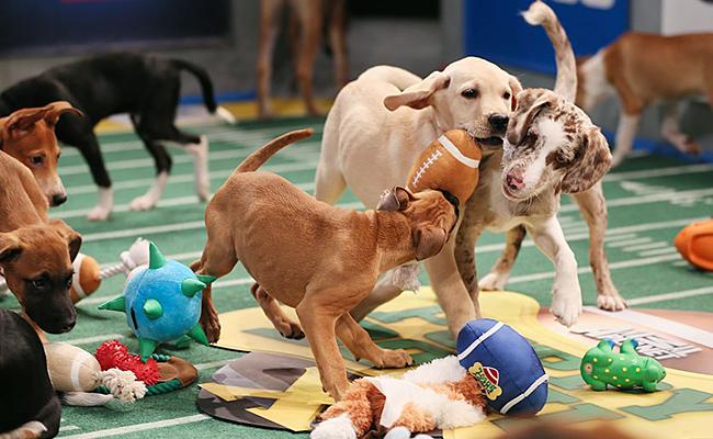 """Prepárate para el """"Puppy Bowl"""", el juego Cannino más tierno"""