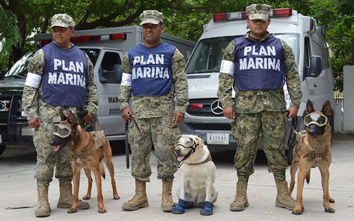 Frida, Evil y Eco ¿qué ha pasado con los perros rescatistas?