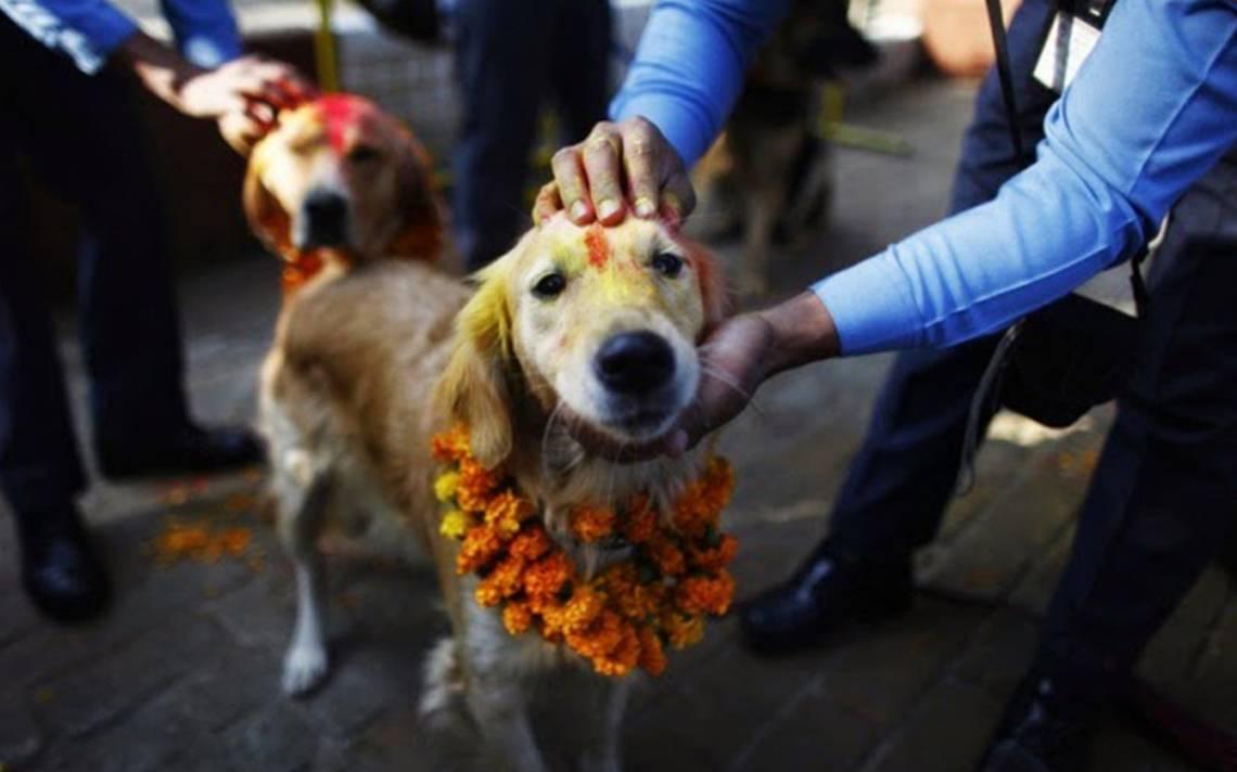 Celebra y pinta de colores a tu perrito en el festival hindú de CDMX