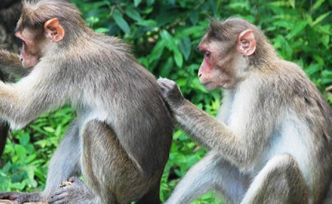 Zoológico sacrifica 57 monos para proteger especie indígena