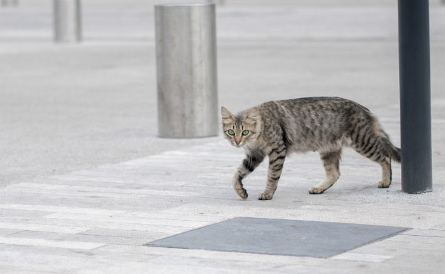 Gato mata a japonesa de una mordida, le contagió el virus SFTSV