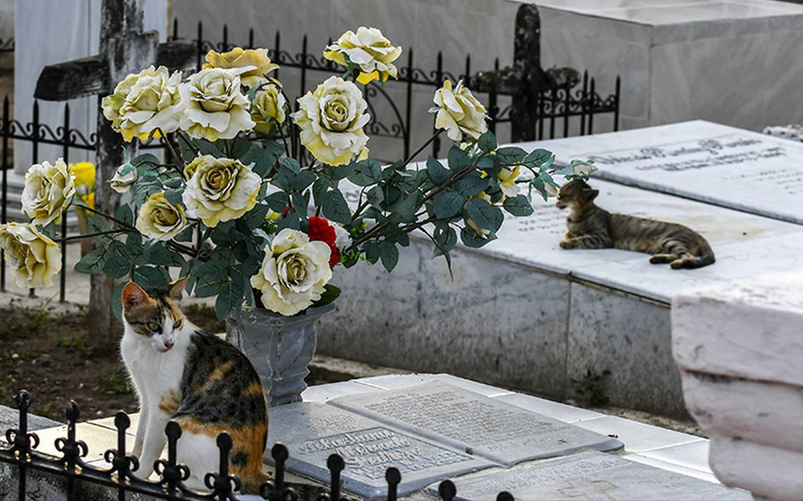 ¿Pacto con el diablo? gatos cuidan tumbas en panteón de Colombia