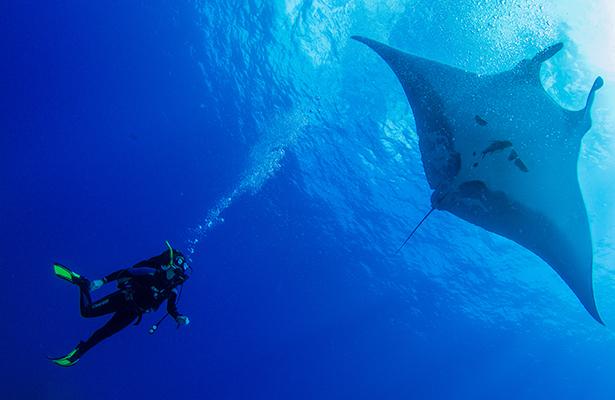 Universitarios mexicanos contribuirían a conservar los océanos