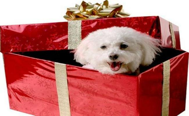 ¡Lo que debes saber antes de regalar una mascota en Navidad!