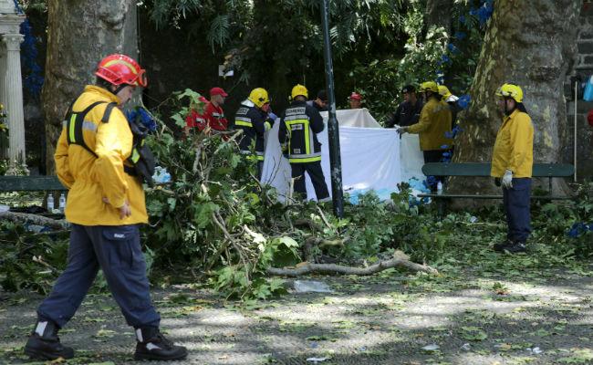 Cae árbol de 200 años y mata a 12 personas durante festividad religiosa