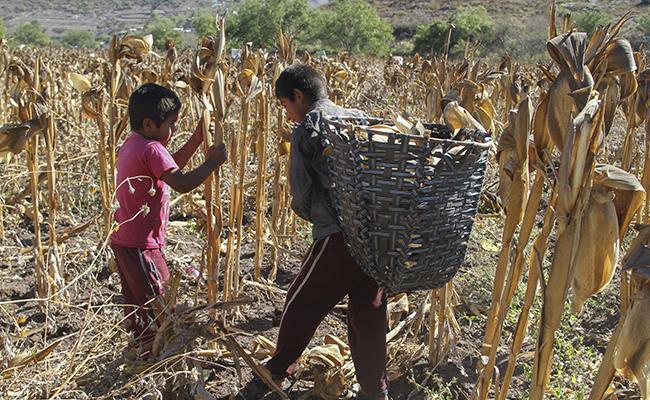 Hay 168 millones de niños trabajadores en el mundo, estima FAO
