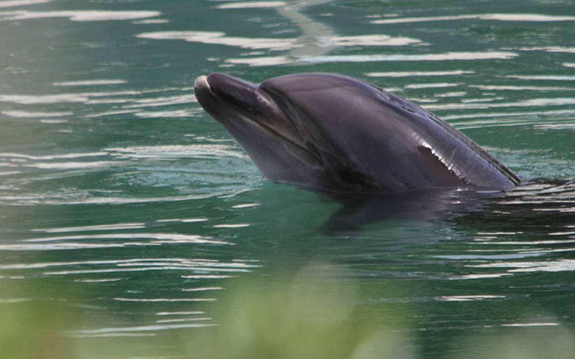 """Abandonan al delfín """"Honey"""" y 46 pingüinos en acuario de Japón"""