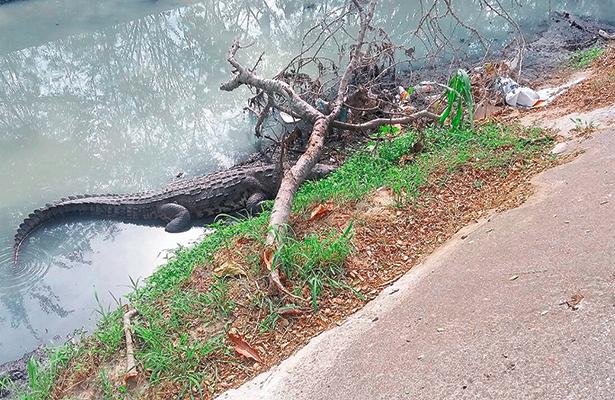 Peligran especies en la Laguna del Carpintero