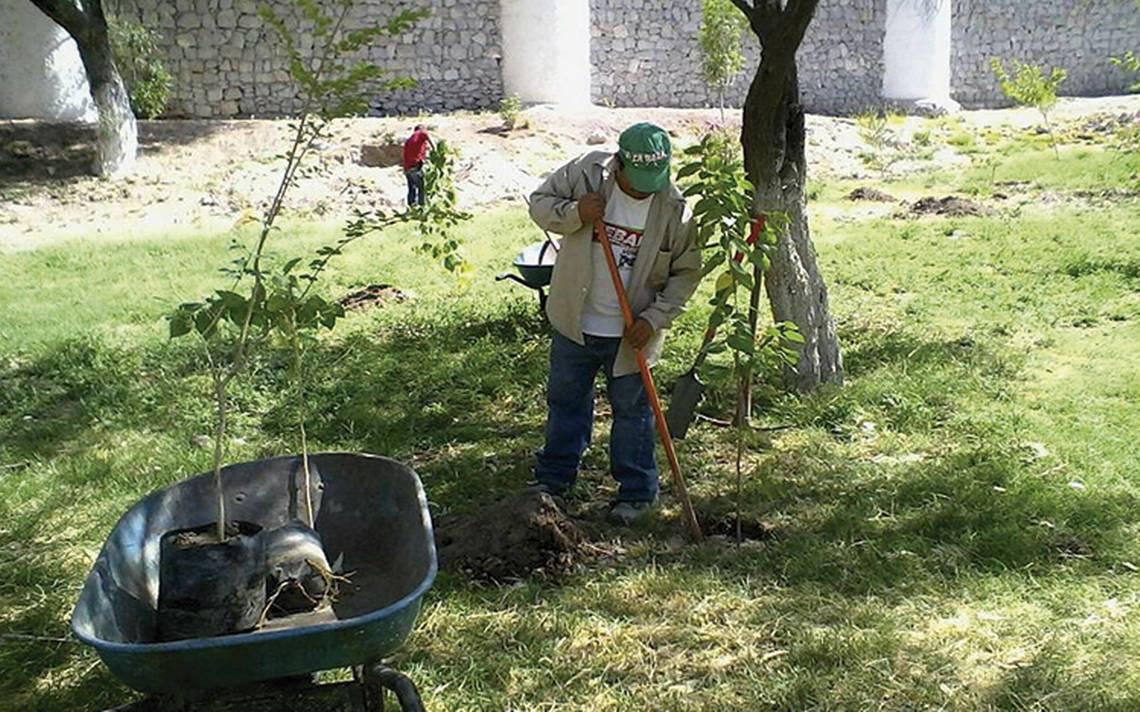 Lerdo busca producir 30 mil árboles en 2018