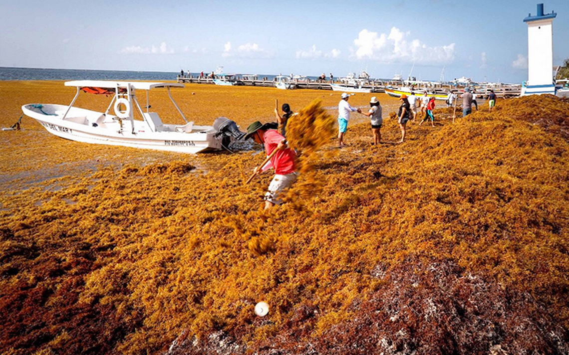 Evalúan declarar desastre natural por toneladas de sargazo en playas mexicanas