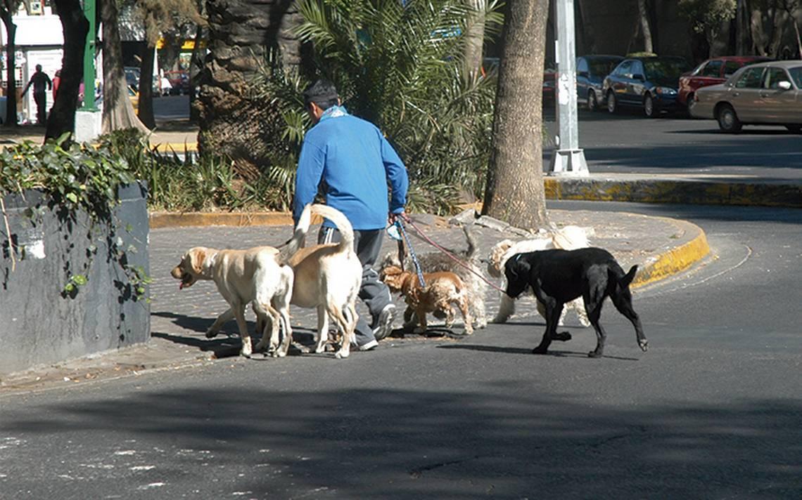 Aeropuertos mexicanos dan bienvenida a mascotas extranjeras