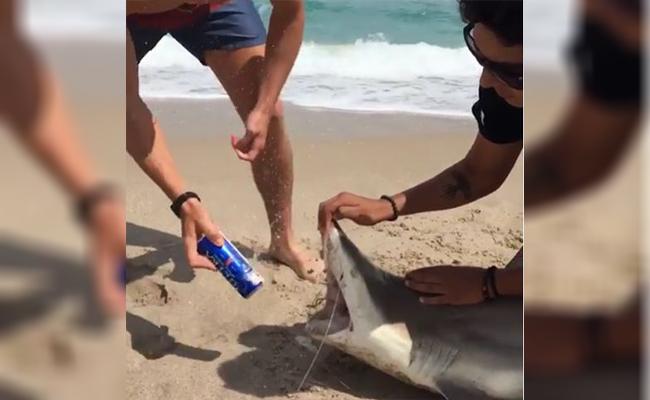 Spring breakers usan tiburón bebé para abrir una cerveza
