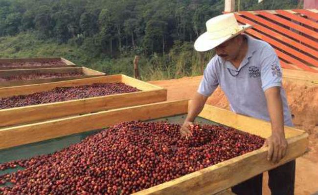 Cafeticultores de Chiapas bloquearán la frontera México – Guatemala
