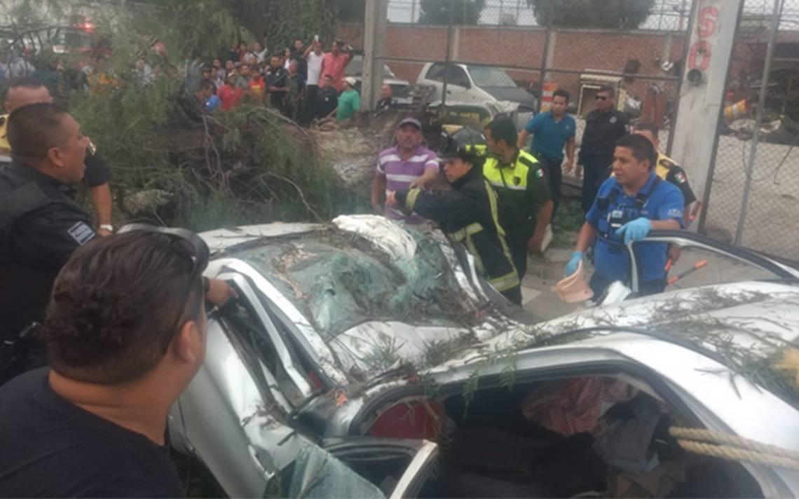 [Video] Árbol colapsa en Ecatepec; deja un muerto y un herido