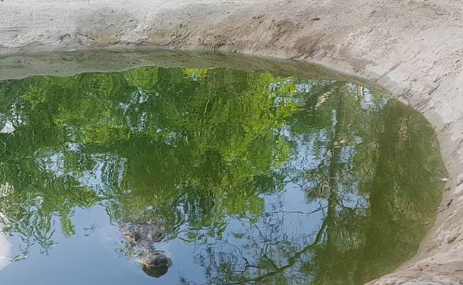 Utilizan en Tamaulipas a crías de cocodrilos como mascotas